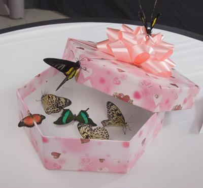 тропические бабочки в коробке