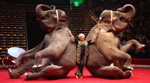 представление в цирке со слонами