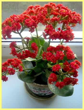 комнатные цветы в горшке
