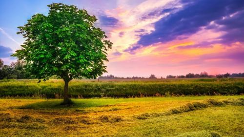молодое растущее дерево