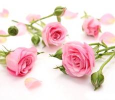 Что дарить друзьям на розовую свадьбу