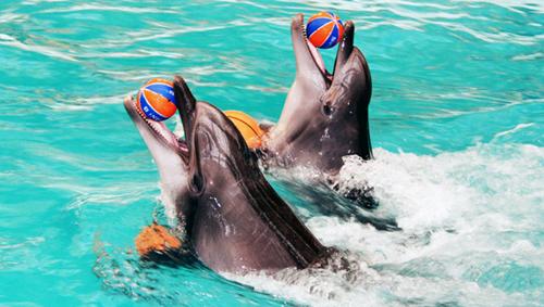 плавание с дельфинами в дельфинарии