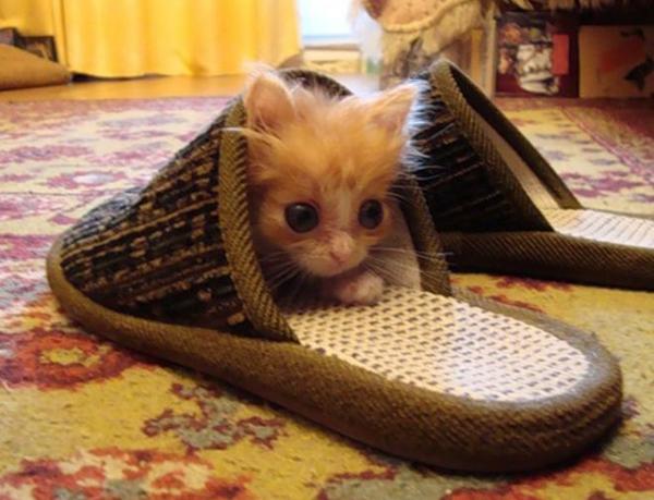 котенок в тапочке