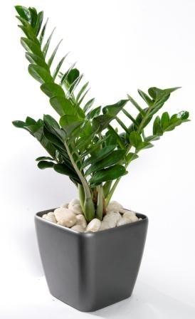 красивое комнатное растение